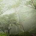 Photos: 霧中