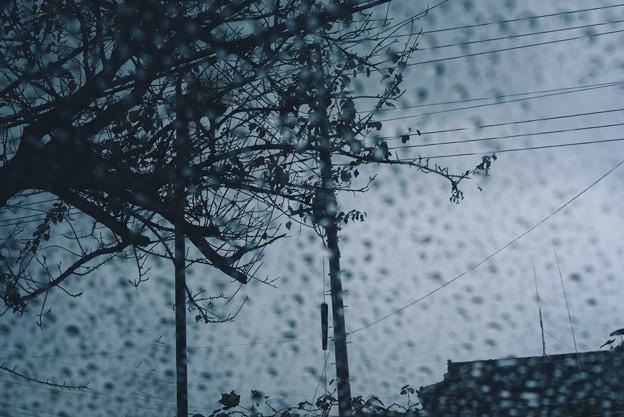 曇り時々雨、晴れたらセンパチ