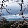 写真: 四月 櫻花與琵琶湖