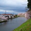 写真: 四月 ?根城 河邊