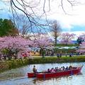 写真: 四月 ?根城小船
