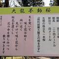 大龍寺「大龍不動桜」解説板