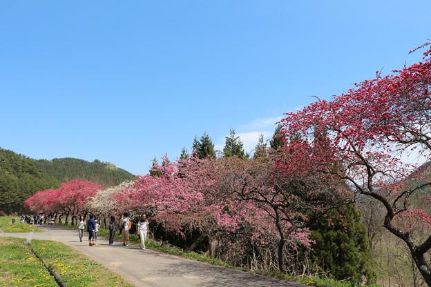 花桃ロード