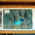 写真: 五葉の森案内図