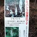 写真: 「シモバシラ」保護区説明