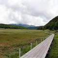 写真: 池の平湿原木道