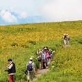 写真: ニッコウキスゲ咲く丘