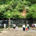 写真: 白糸の滝見物観光客