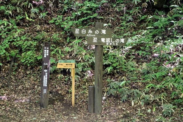 左「白糸の滝」・右「竜返しの滝」案内版