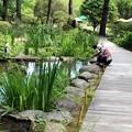 めだかの池