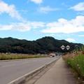 国道254号線は、元祖「コスモス街道」