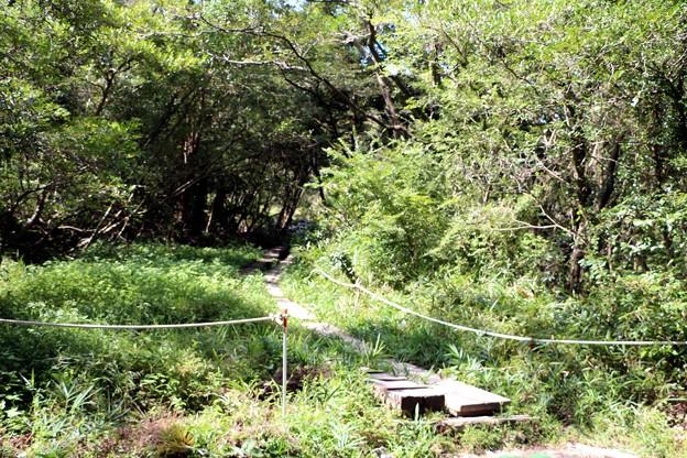 葦毛湿原散策木道入口