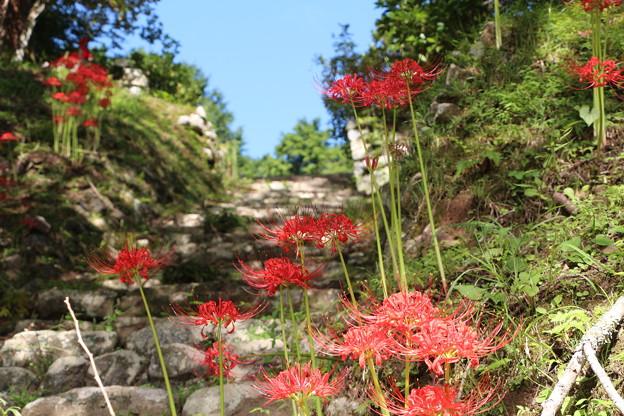 参道階段に咲く彼岸花