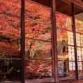 Photos: ガラス戸に映し出す紅葉