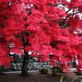 写真: 長圓寺参道の紅葉