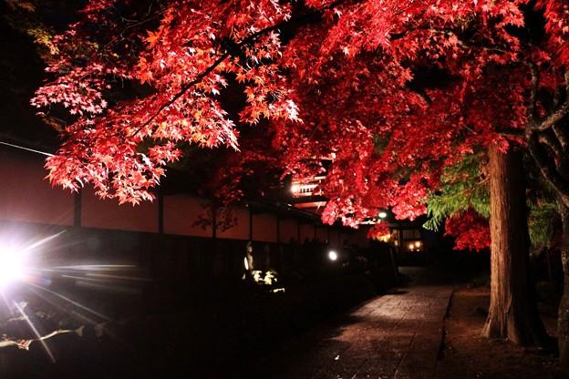 写真: 参道のライトアップ