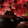 参道のライトアップ