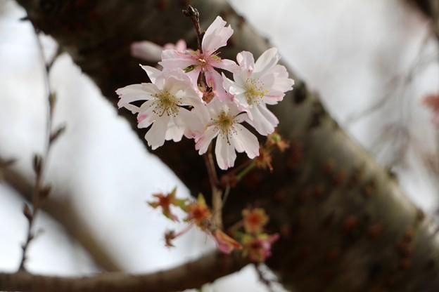 冬の花見見物