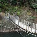 写真: おしどり吊り橋