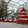 Photos: クリスマスムード