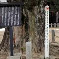 西岸寺のカヤ (飯島町天然記念物)