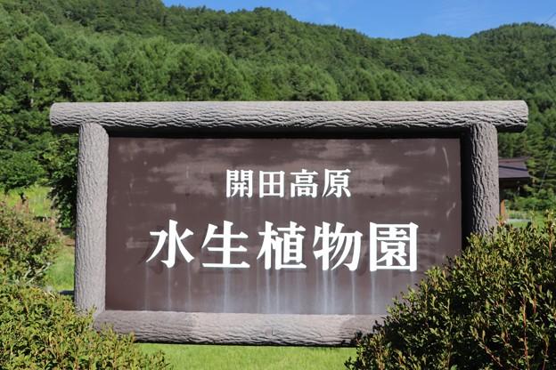 開田高原・水生植物園