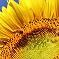 Photos: 忙しい蜂