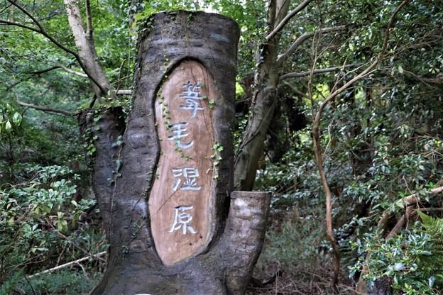 葦毛湿原木彫り