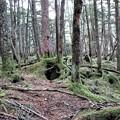 Photos: 日本の貴重なコケの森