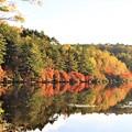 Photos: 白駒の池の紅葉景観