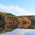 Photos: 白駒の池の紅葉