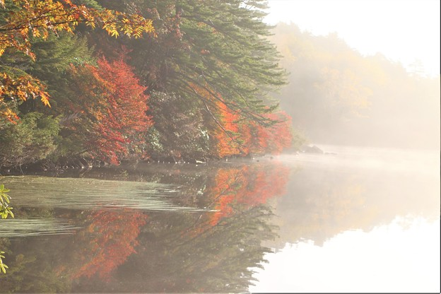 霧の架かる白駒の池の紅葉