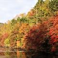 Photos: 紅葉の白駒池の風景