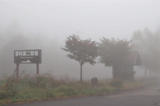濃霧の蓼科第二牧場入口