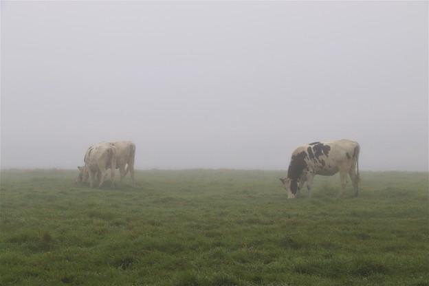 濃霧の蓼科第二牧場