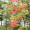 紅葉の始まり