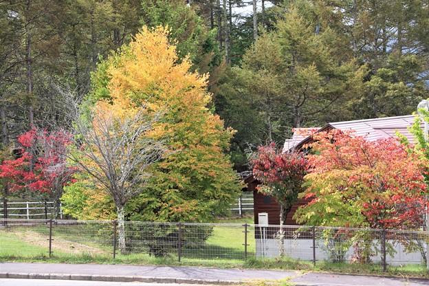 秋の紅葉風景