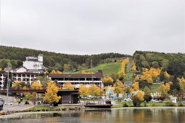 池の平ホテルの黄金のアカシア