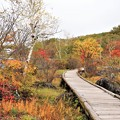 白樺湖南側湖畔の散策木道