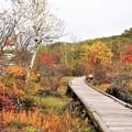 Photos: 白樺湖南側湖畔の散策木道