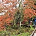 紅葉の散策見物客