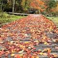 木道の落葉