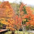 白樺湖畔の紅葉