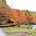 紅葉の散策木道