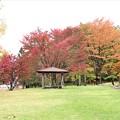 芝生広場も紅葉