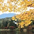 北横岳と黄葉