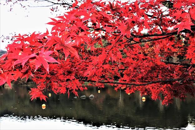 蓼科湖の真っ赤な紅葉