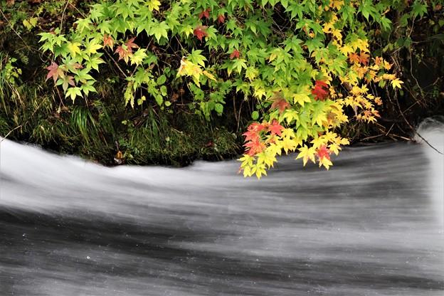 渓流の紅葉