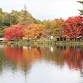 蓼科湖紅葉