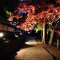 Photos: 長円寺参道のライトアップ